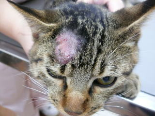 「皮膚糸状菌症」の画像検索結果